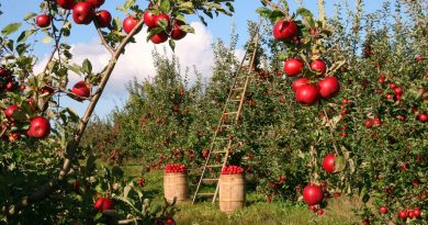 5 Things To Consider Before Buying Land For Your Agricultural Business